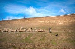 Schäferhund mit seinen Schafen Stockfotografie
