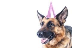 Schäferhund Party Dog Lizenzfreies Stockfoto