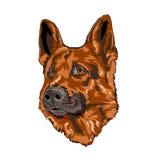 Schäferhund Portrait vektor abbildung