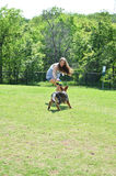Schäferhund Puppy Play Lizenzfreies Stockfoto
