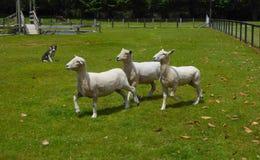 Schäferhund und drei Schafe lizenzfreies stockbild