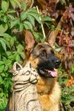 Schäferhund und Katzestatue Lizenzfreies Stockfoto