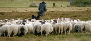 Schäferhund und seine Schafe Lizenzfreie Stockfotos