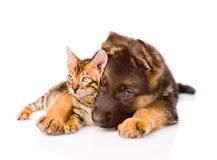 Schäferhundhündchen, das wenig Bengal-Katze umfasst Lizenzfreie Stockbilder