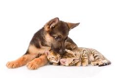 Schäferhundhündchen küsst Bengal-Katzen Lokalisiert auf Weiß Lizenzfreie Stockfotos