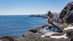 Schäferhundhund, der auf felsigem Neufundland und Labrador c sitzt stockfoto