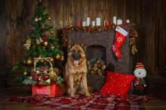 Schäferhundhund für Weihnachten Lizenzfreie Stockbilder