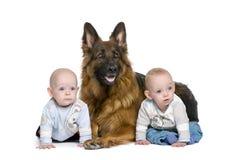Schäferhundhund mit dem Jungen mit 2 Zwillingen Lizenzfreie Stockfotos