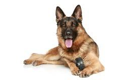 Schäferhundhund mit einem Spielzeug Lizenzfreies Stockbild