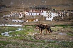 Schäferhundstand vor Karzok-Stadt Tso Moriri am See in Ladakh, Indien Lizenzfreie Stockbilder