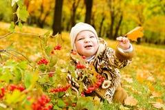 Schätzchen über gelben Blättern stockbilder