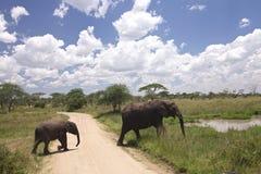 Schätzchen-afrikanischer Elefant Stockfotografie