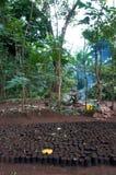 Schätzchen-Bäume Lizenzfreies Stockfoto