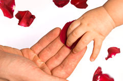 Schätzchen, das rosafarbene Blumenblätter berührt Lizenzfreies Stockfoto