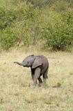 Schätzchen-Elefant Lizenzfreie Stockfotos