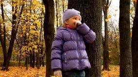 Schätzchen im Herbstwald stock footage