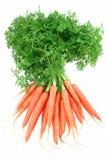 Schätzchen-Karotten Stockfoto