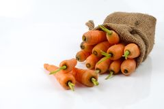 Schätzchen-Karotten getrennt Stockfotografie