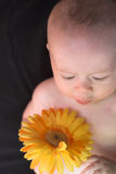 Schätzchen mit Blume Stockfotos