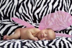 Schätzchen mit rosafarbenem Engel wings auf Zebrahintergrund Stockbild