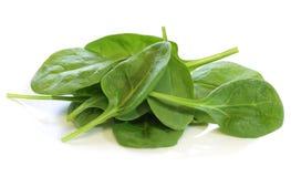 Schätzchen-Spinat stockfoto
