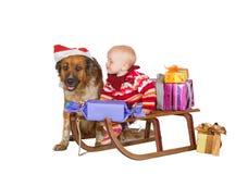 Schätzchen und Hund auf Weihnachtsschlitten Lizenzfreie Stockfotos