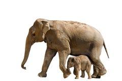 Schätzchen- und Mutterelefant Lizenzfreie Stockfotografie