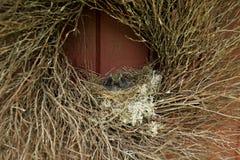 Schätzchen-Vögel in einem Nest Lizenzfreies Stockbild