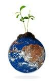 Schätzchenanlage, die von der Erde wächst lizenzfreie abbildung