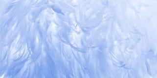 Schätzchenblau-Federhintergrund Lizenzfreie Stockbilder