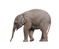 Schätzchenelefant lizenzfreie stockfotos