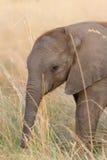 Schätzchenelefant stockfotos