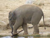 Schätzchenelefant Stockfoto