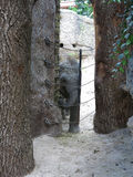 Schätzchenelefant im Zoo Stockbild