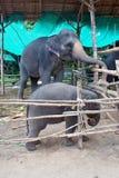 Schätzchenelefant mit seiner Mutter Lizenzfreies Stockfoto