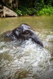 Schätzchenelefant sitzt im Wasserfall, Fluss Stockfoto