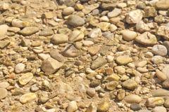 Schätzchenfische Lizenzfreies Stockbild