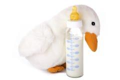 Schätzchenflasche mit Milch stockfotos