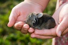 Schätzchenhäschen in den Händen. lizenzfreies stockfoto