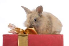 Schätzchenkaninchen auf einem Geschenk Stockfotos