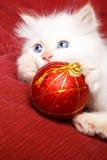 Schätzchenkatze mit Weihnachtsdekoration Stockfotos