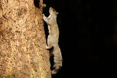 Schätzchenrot stockbilder