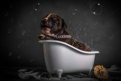 Schön badet der Welpe im Badezimmer Stockfotos