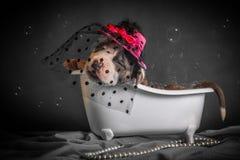 Schön badet der Welpe im Badezimmer Lizenzfreie Stockfotos