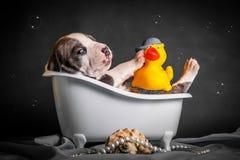 Schön badet der Welpe im Badezimmer Stockfoto