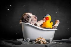 Schön badet der Welpe im Badezimmer Stockbilder