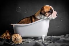 Schön badet der Welpe im Badezimmer Lizenzfreies Stockbild