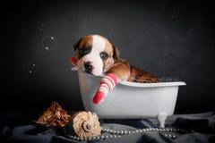 Schön badet der Welpe im Badezimmer Stockfotografie