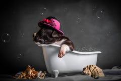 Schön badet der Welpe im Badezimmer Lizenzfreie Stockfotografie
