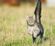 Schön ein Tiger-gestreifter Katzenspaßhals auf Fehllichtung in hohem Grade podb stockbild